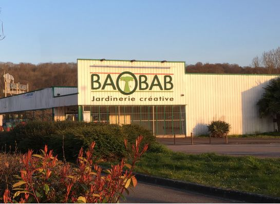 BAOBAB INCARVILLE µ